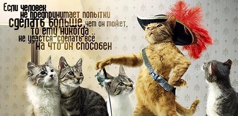 kot w sapogach