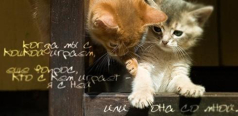 Kiedy bawię się z kotką powstaje pytanie - kto z kim się bawi - ja z nią, czy ona ze mną