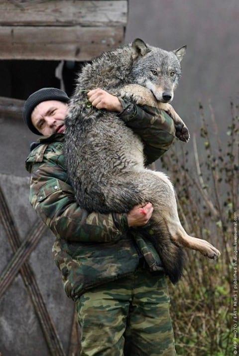 Wilcza macocha – ciekawe teksty po rosyjsku