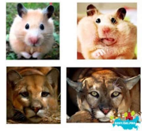 Uczymy się nazw zwierząt po rosyjsku na wesoło