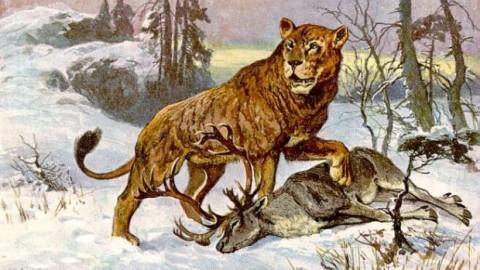 Naukowcy znaleźli na Syberii dwa zamrożone lwiątka. Zachował się każdy szczegół – mają nawet wąsy!